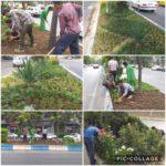 کاشت گل های فصلی در بلوار اصلی امام خمینی (ره)