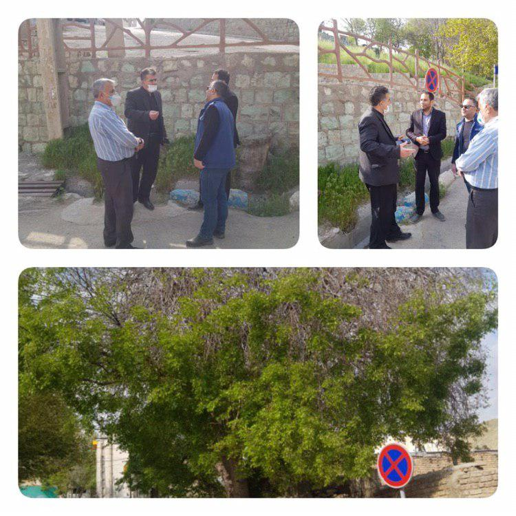 بازسازی و نگهداری  درختان و دیگر معضلات شهری