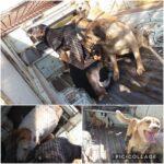 جمع آوری سگهای بلاصاحب توسط شهرداری رودهن
